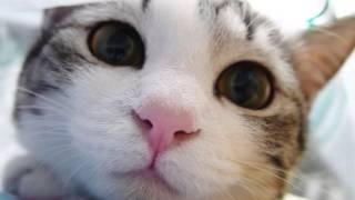Фото животных видео!
