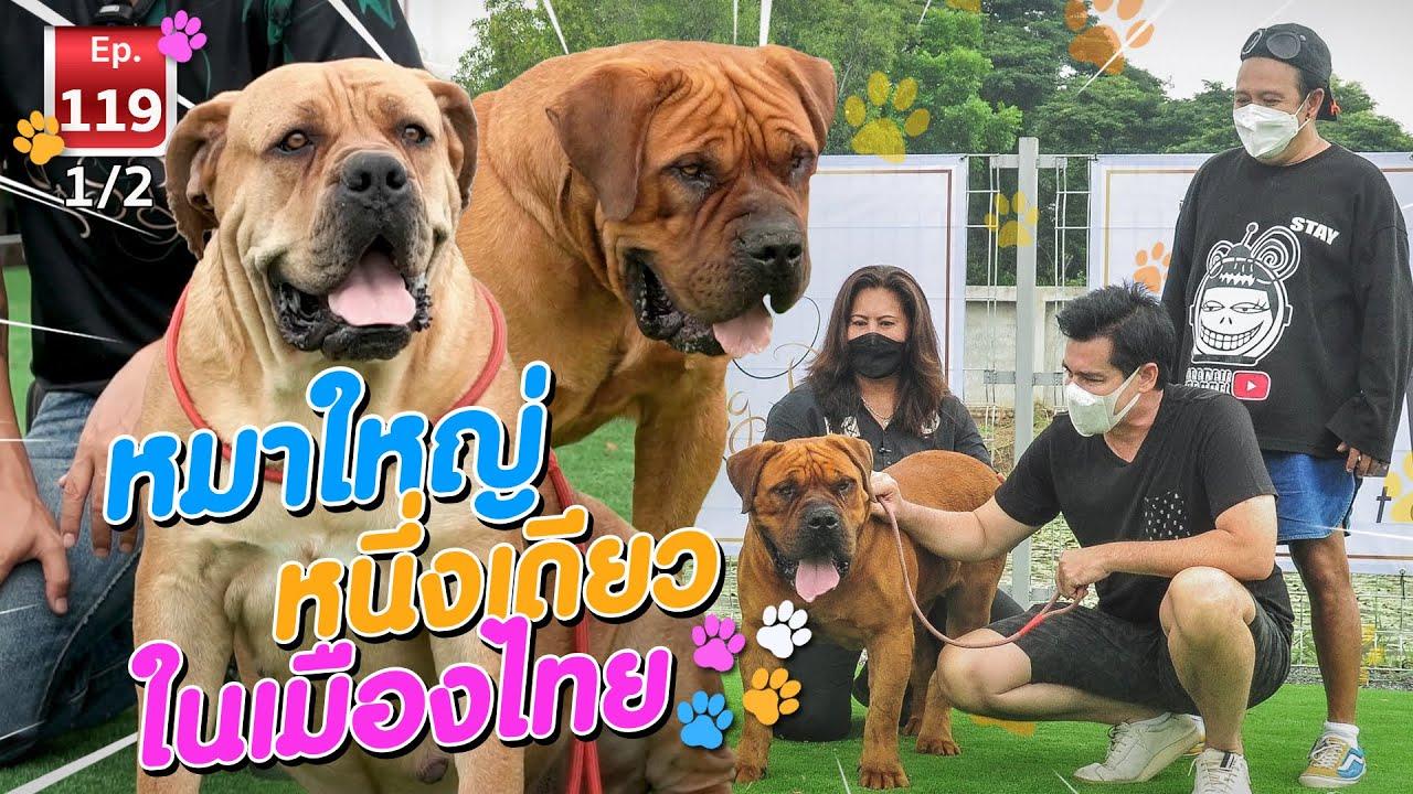 หนึ่งเดียวในเมืองไทย ASIA BIG DOG - เพื่อนรักสัตว์เอ้ย EP.119 [1/2]