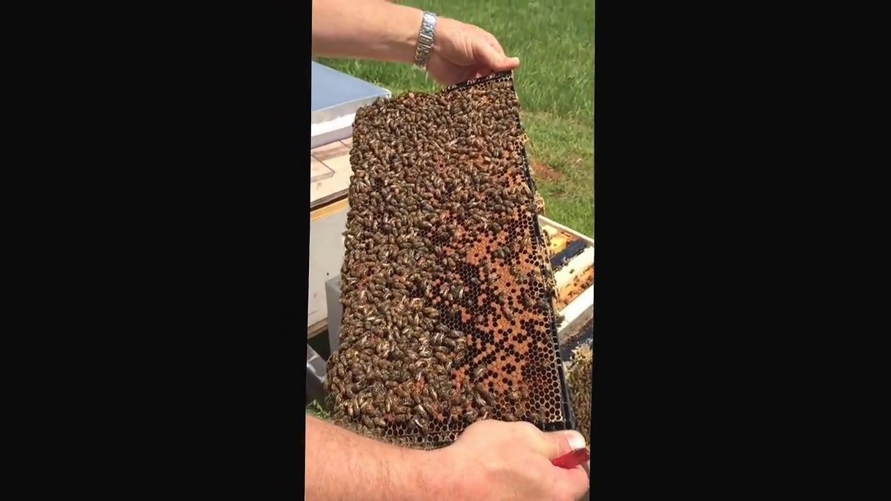 Brown U0026 39 S Beef And Bees  2017 Nuc Installation