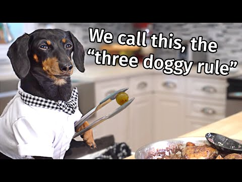 Ep 7: Chef Jacques Crusoe - Funny Talking Dog Video, Chef Cooking