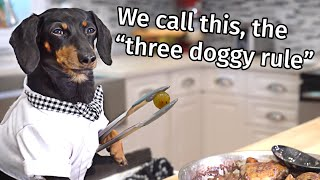 Ep 7: Crusoe the French Chef  Funny Talking Dog Video