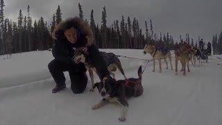 A Dog Sledding Adventure in Alaska
