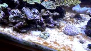 6 MONTH REEF TANK UPDATE - PHOSPHATE NITRATE ALGAE PROBLEMS (PART 1)