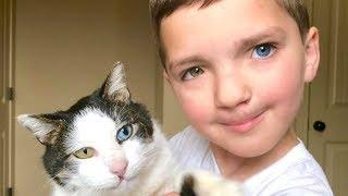 Bu Kedi Küçük Çocuğun Hayatını Değiştirdi