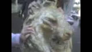 Porno xxx zoofilia piedrofilia Saltillo, Amor de Animales!!!