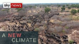 A New Climate: Why elephants are killing people in Zambia