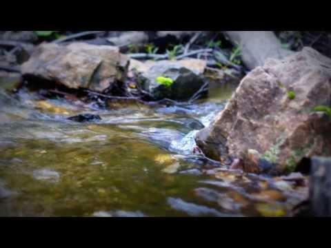 Дикая природа в Окрестностях г Кушва