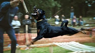 Amazing Rottweiler Performs Ultimate Dog Tricks - How to Train Your Dog PERFECTLY