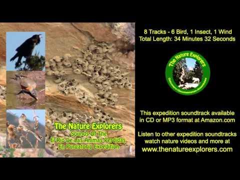El Rio De Las Animas Perdidas En Purgatorio Soundtrack Birds Song Colorado Wildlife Nature Sounds