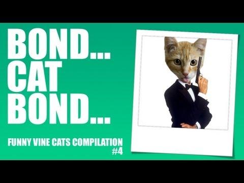 Bond… Cat Bond! – Funny Vine Cats #4