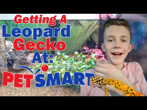 Getting a Leopard Gecko at PetSmart