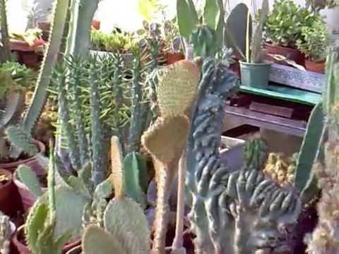si te gustan los cactus o cactos pas por ac youtube On vivero suculentas santiago