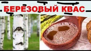 Как сделать березовый квас из березового сока