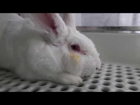 Imágenes sensibles: destapan un caso de extrema crueldad contra animales en un laboratorio de Madrid