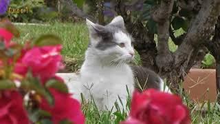 Приколы с кошками 2018. Смешные коты и кошки. Для поднятия настроения! №2