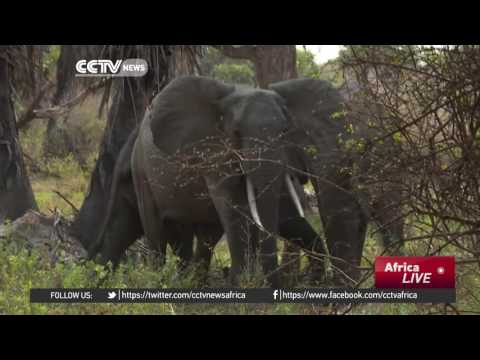 Tanzania's tourism board encourages locals to visit game parks