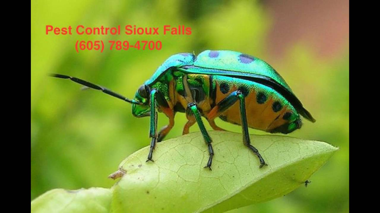 Pest Control Sioux Falls  Sioux Falls SD Pest Control - The Best Pest Control in Sioux Falls SD