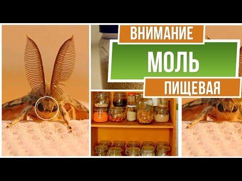 Осторожно пищевая моль ❗ Как навсегда избавиться от пищевой моли