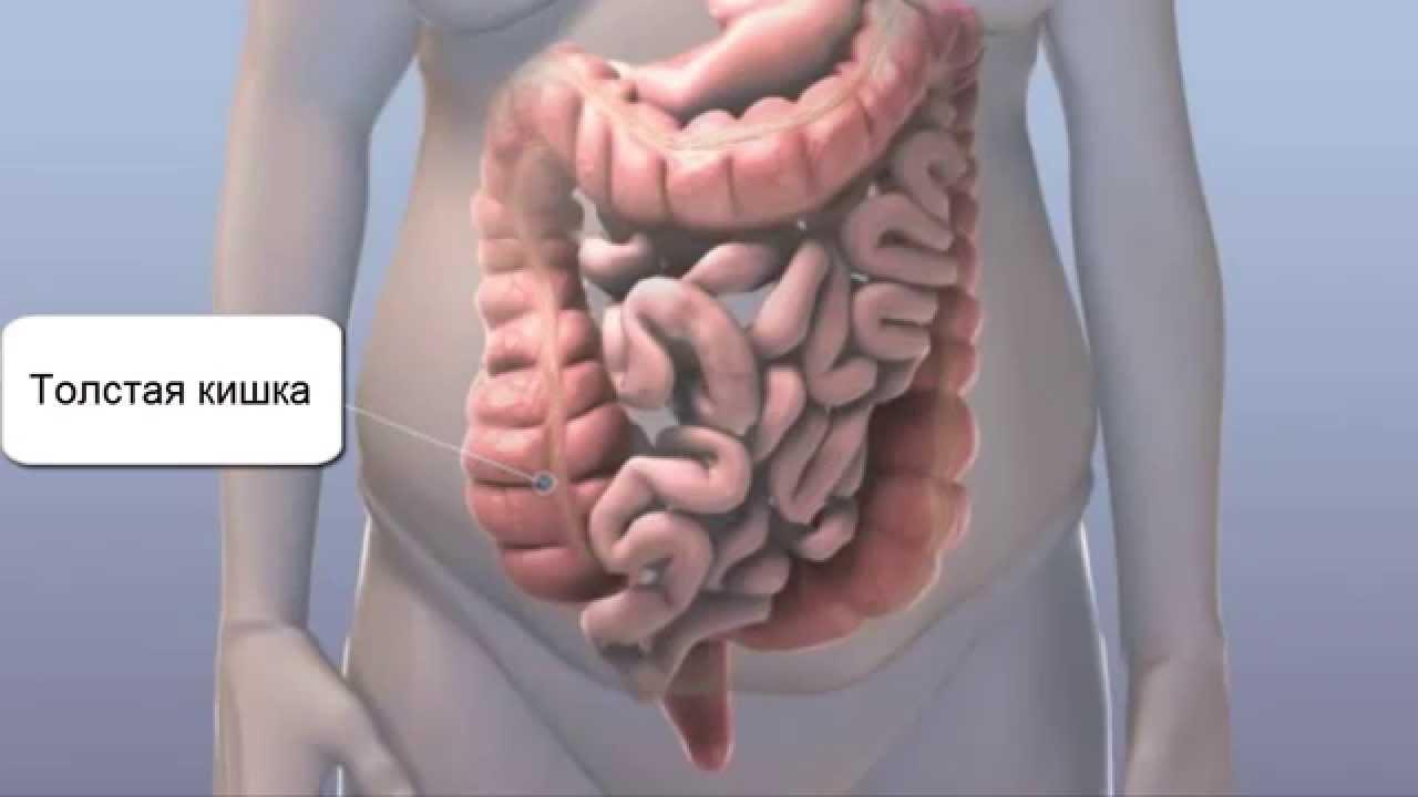 Толстая и прямая кишка Очищение кишки человека - YouTube
