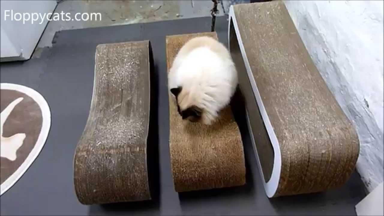 Petfusion Cat Scratcher Lounge Vs Karma Products Infinity Jumbo Floppycats You
