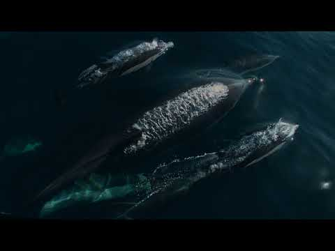 Being Dolphin 4D | Trailer