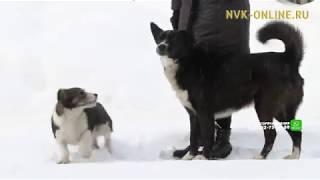 Ребенок, которого покусали собаки, получил обморожения рук и головы