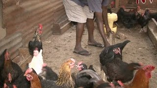 On The Farm: Erias Kasumba has no regrets after choosing to concetrate on local chicken