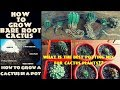 How to Grow Cactus Fast n Easy