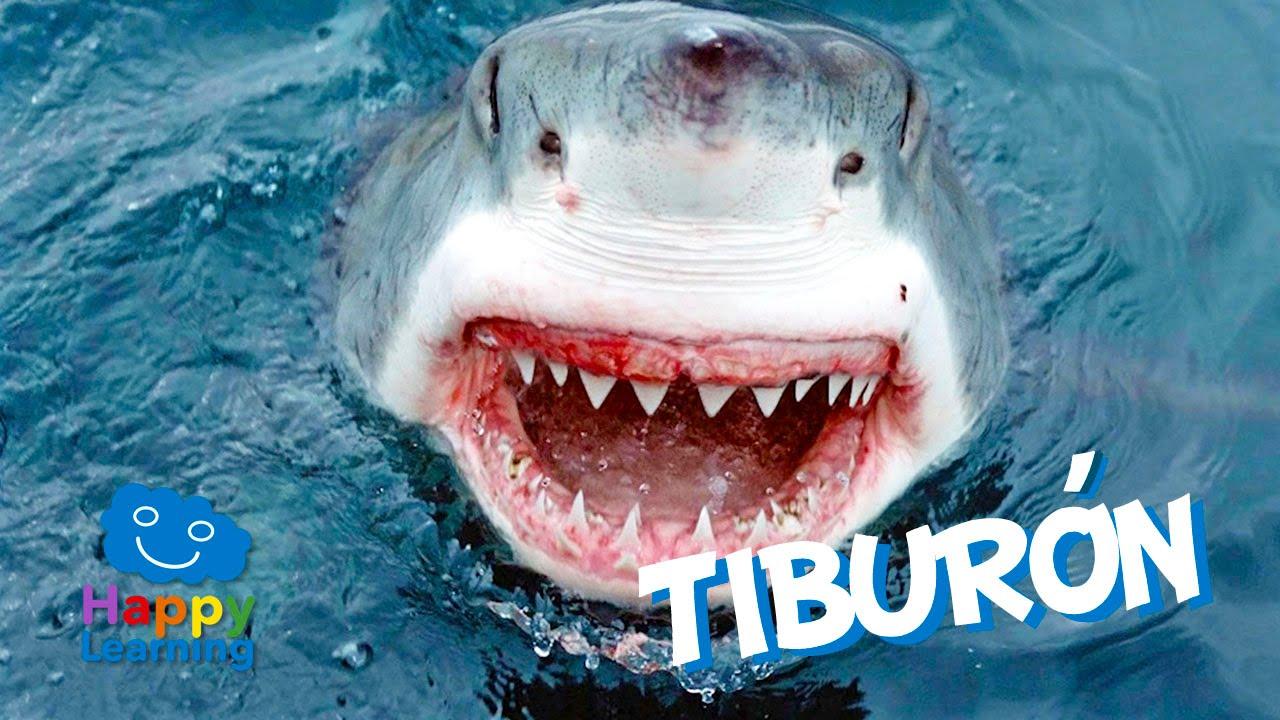 El Tiburón | Videos Educativos para Niños - YouTube