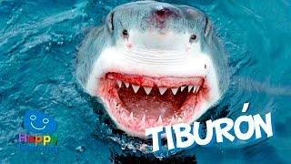 El Tiburn  Videos Educativos para Nios