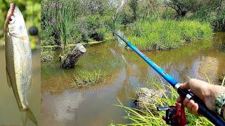 FISHING RIVER  а.С.м