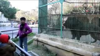 فيديو وصور  أطفال يعملون بـ«حديقة حيوان الإسكندرية» بالمخالفة للقوانين