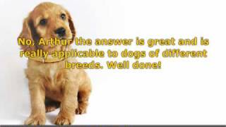 Dog Grooming - Effective Tips For A Well Behaved Dog