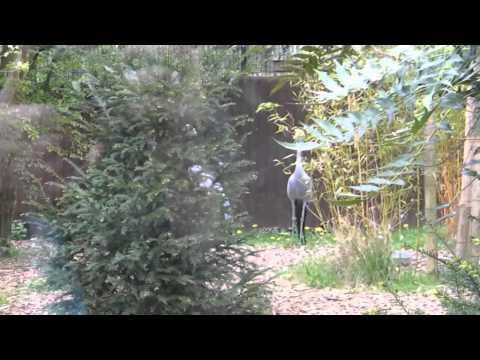 Visit Birmingham Nature Centre | Birmingham Travel Guide Tour | Birmingham Zoo