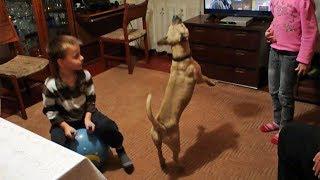 Собака Кузя - волейболист!