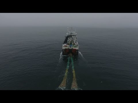 Greenpeace Investigates Arctic Bottom Trawling Fleet
