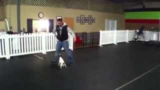 Darla, Anxious Jack Russel, Dog Training Charlotte North Carolina