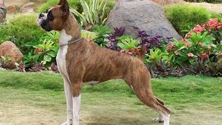 Top 10 Easiest Dog Breeds To Train