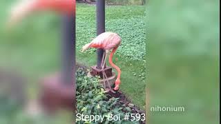 Steppy Boi #593