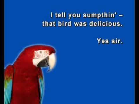 funny bird video must watch   youtube