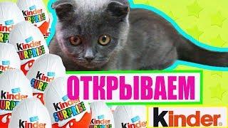 Котенок Баттерс открывает Киндер Сюрприз и собирает коллекцию игрушек