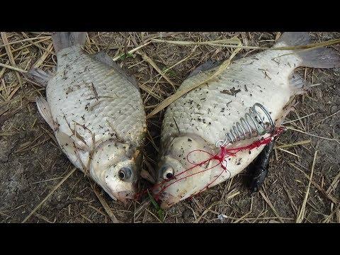 Клёв рыбы на