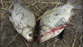 Клёв рыбы на речке, не перестает удивлять  и новые чучела от магазина Banggood