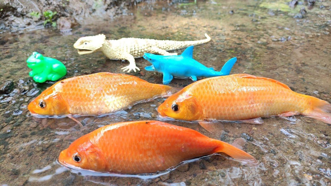 Looking For Ornamental Fish, Koi Fish, Carp, Sea Animal Toys, Octopus, Frog, Lobster [Part518]