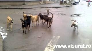 Haita de caini in Hunedoara