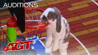 Bini The Bunny Performs EPIC Stunts on AGT - America's Got Talent 2021