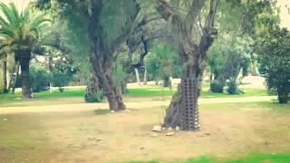 Camping Anemomolis Finikounda Peleponnes Griechenland