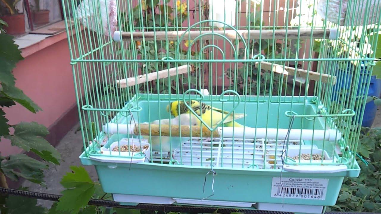Papagali in calduri