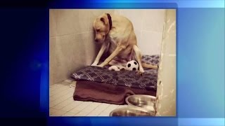 Video: 'World's saddest dog' in need of a home