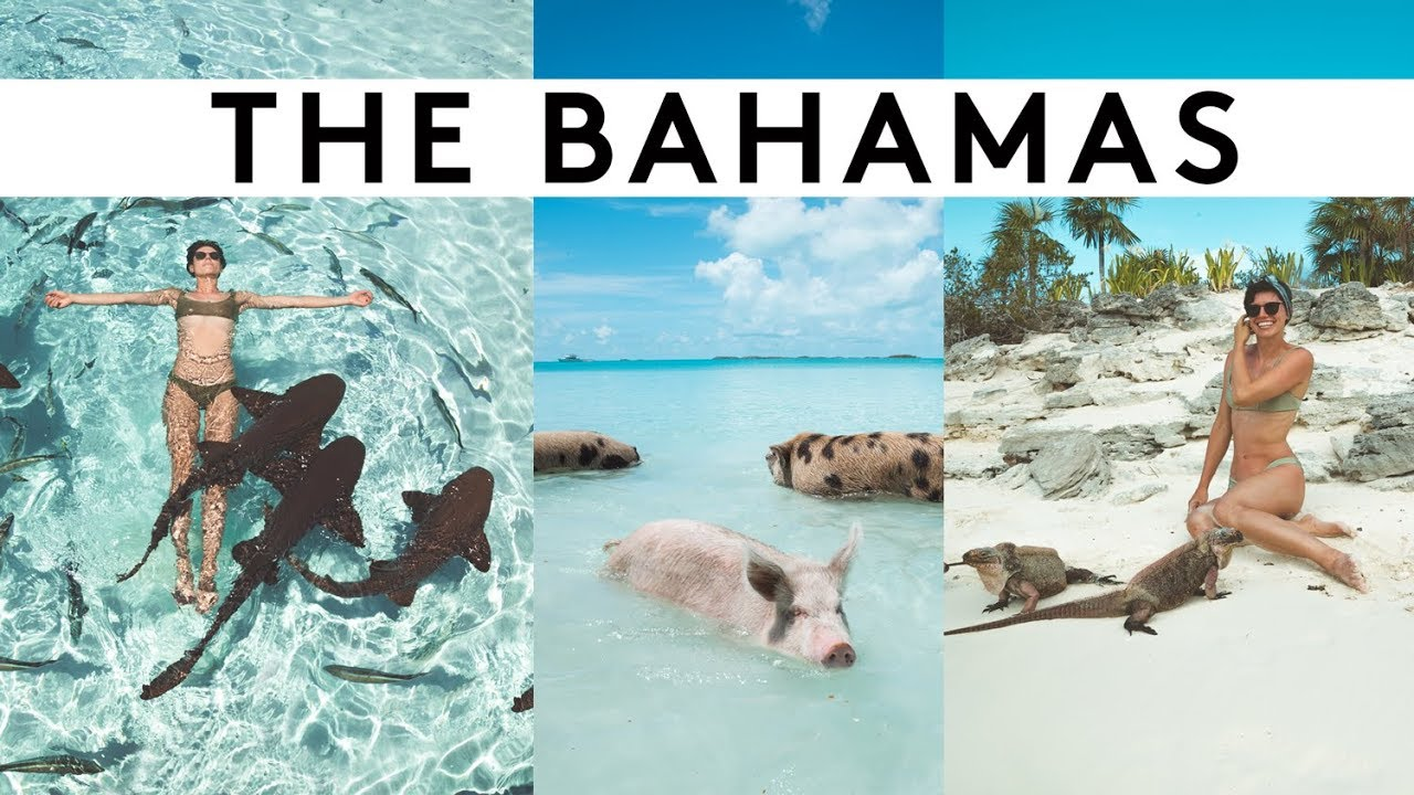 SWIMMING WITH PIGS & SHARKS IN THE BAHAMAS! | Sorelle Amore